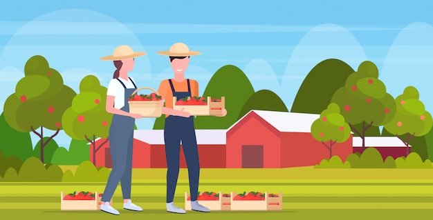 Couple farmers holding red ripe apples crates man woman agricultural workers harvesting fruits eco farming concept farmland countryside landscape  full length