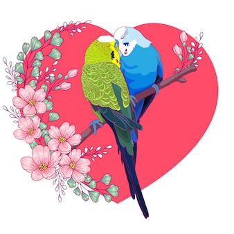 Couple of lovely budgies kissing on a branch