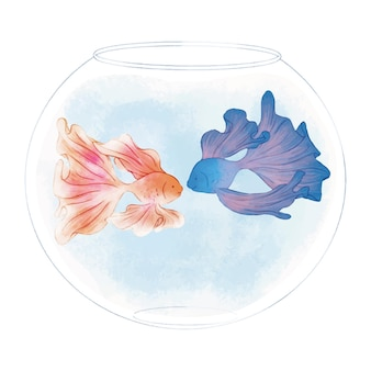 ボウルタンクかわいいイラストのベタ魚のカップル