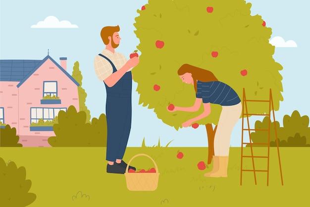 カップルの人々は庭の農業でリンゴを選ぶ農業農家はバスケットで果物を選ぶ