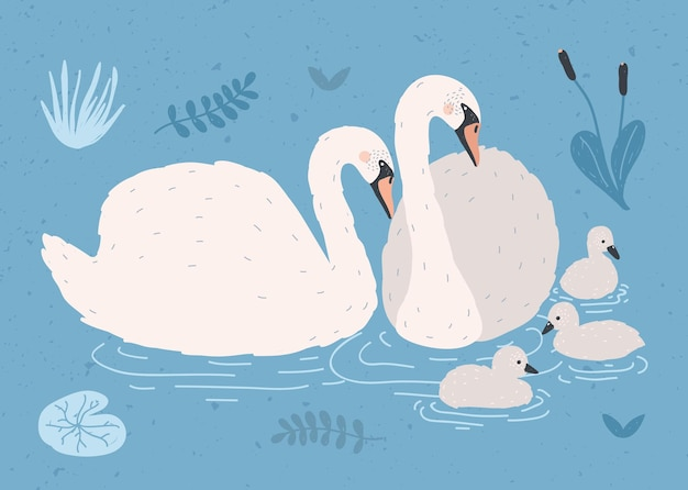 Couple of white swans and brood of cygnets floating together in pond or lake among plants.