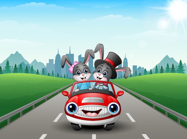 Couples rabbit cartoon driving a car on city background