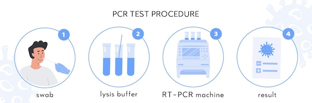 Covid test procedure infographic. nasal swab sample in lysis buffer, rt pcr machine and certificate