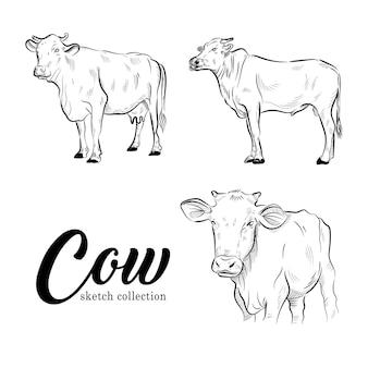 Qurbanベクトルイラストセットの牛動物