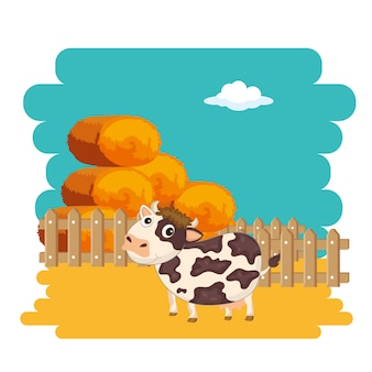 Cow next to bale of hay
