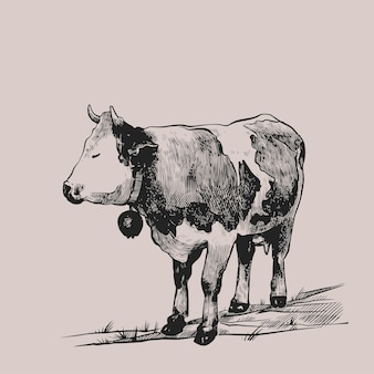 Cow grazing in the meadow hand drawn in a graphic style vintage vector engraving illustration