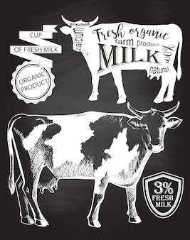 Cow. hand drawn. chalk drawing on the blackboard vector illustration