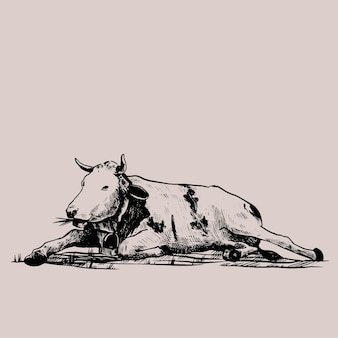 Cow hand drawn in a graphic style vintage vector engraving illustration for poster web packaging