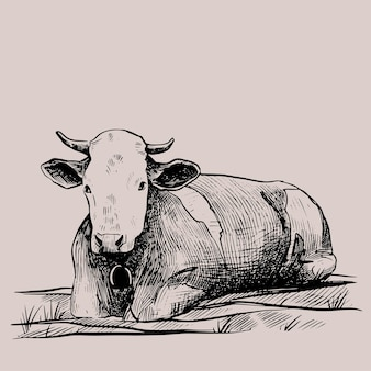 Cow hand drawn in a graphic style vintage vector engraving illustration for poster