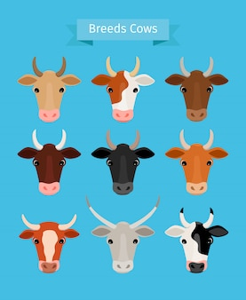 Cow heads vector set