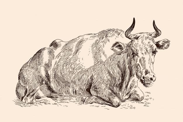 牧草地で牛します。