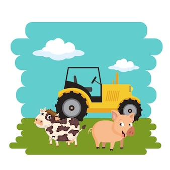 Cow and pig standing next to tractor