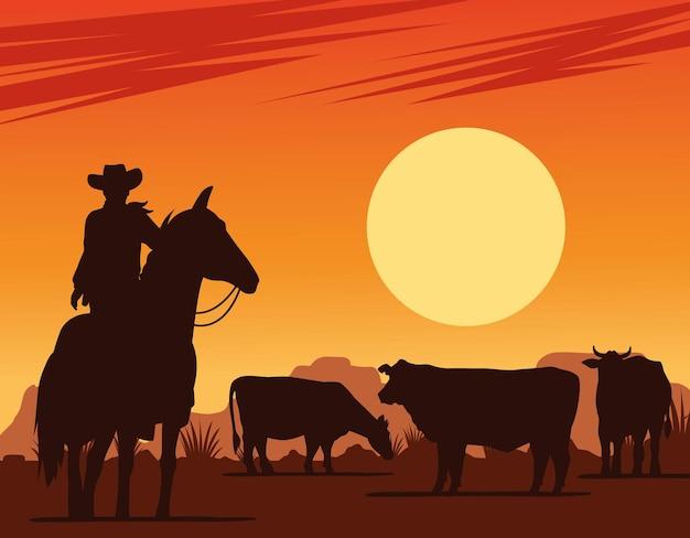 Ковбой на лошади и коровы в сцене заката в пустыне