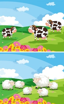 Cows and sheeps in the fields