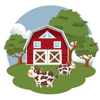 Cows in farmyard