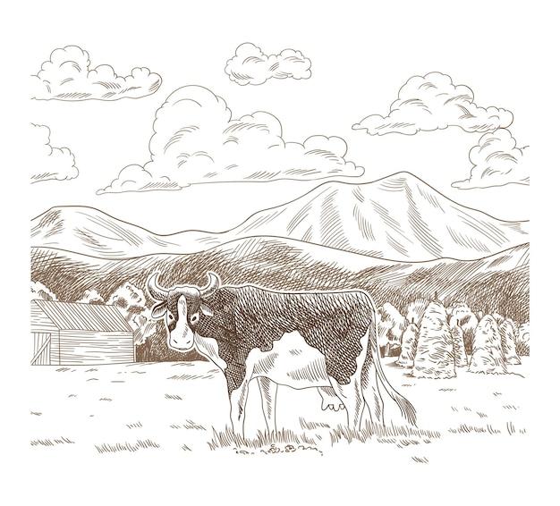 牧草地で放牧する牛