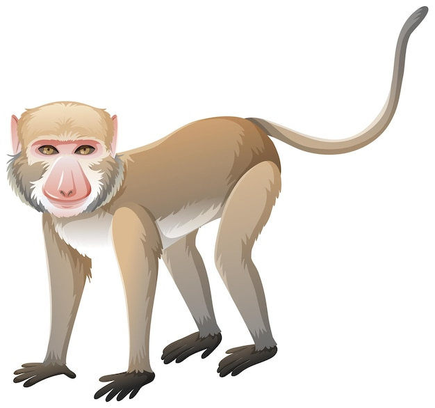 Crab-eating macaque in cartoon style on white background