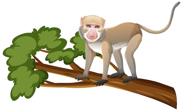 Crab-eating macaque or monkey on tree branch in cartoon style on white background