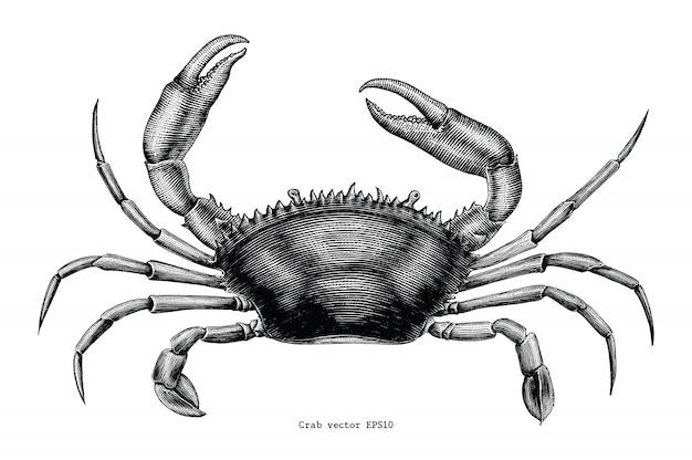 Crab hand drawing vintage