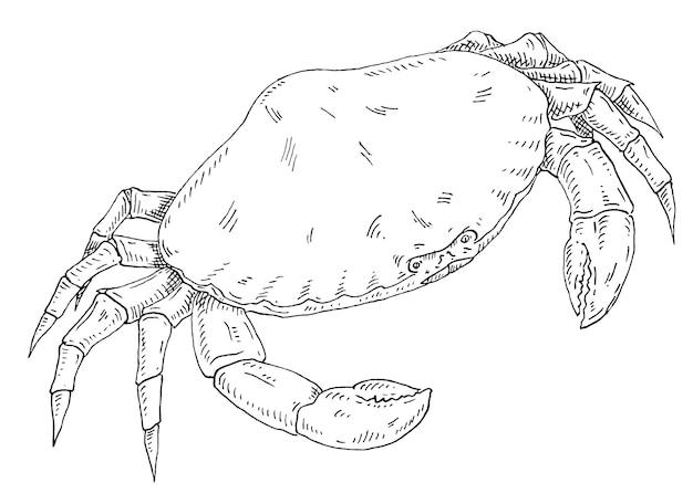 Crab isolated on white background vintage hatching vector monochrome black illustration