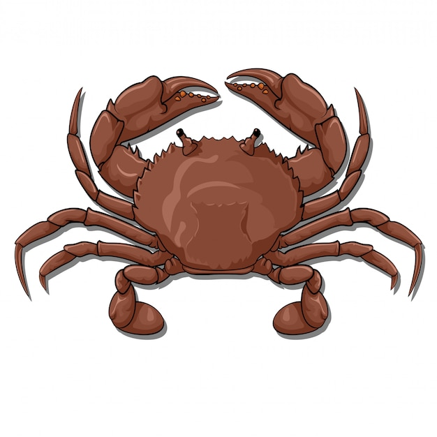 Crab, top view