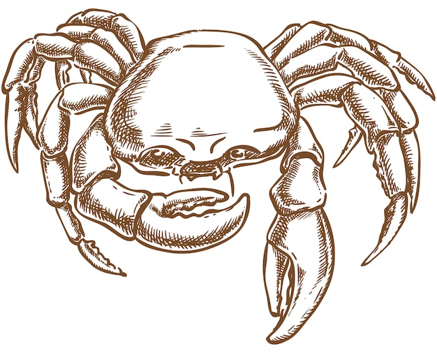 Crab vector sketch hand drawing