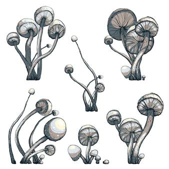 Коллекция композиции компот из грибы поганки