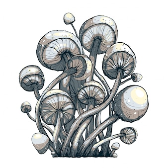 Cramped toadstool mushrooms composition