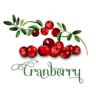 Листья клюквы и ягоды на белом фоне