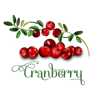 Cranberry leaves and berries isolated on white background