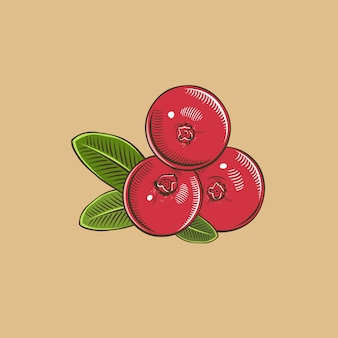 Cranberry in vintage style. colored vector illustration