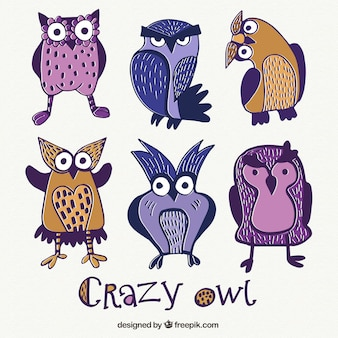 Crazy owls illustration