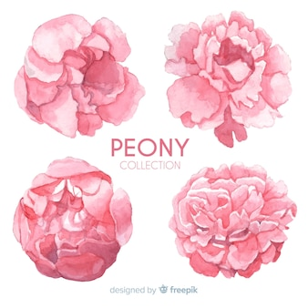 Creative collection of peony flowers