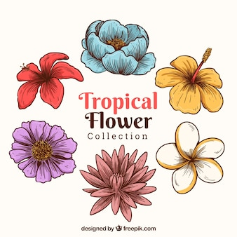 Creative hand drawn tropical flower pack