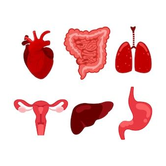 Creative set of human, lung, uterus, stomach, gastrointestinal tract isolated illustration.