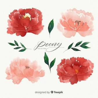 Creative set of peony flowers