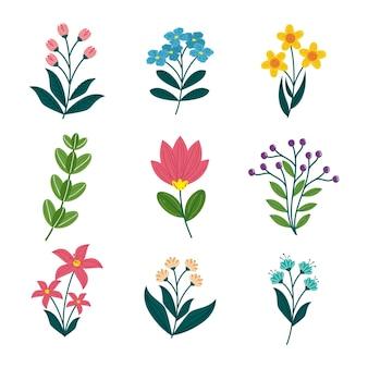 Collezione di fiori primaverili creativi