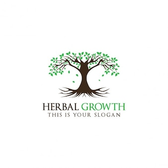 Creativo albero logo