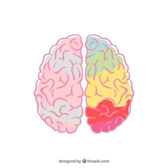 Creativity brain design