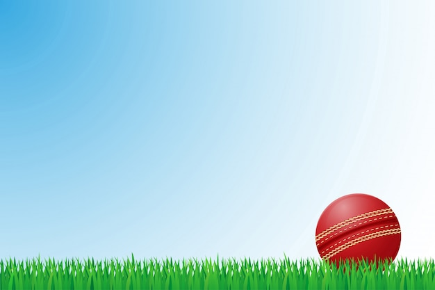 Cricket grass field vector illustration