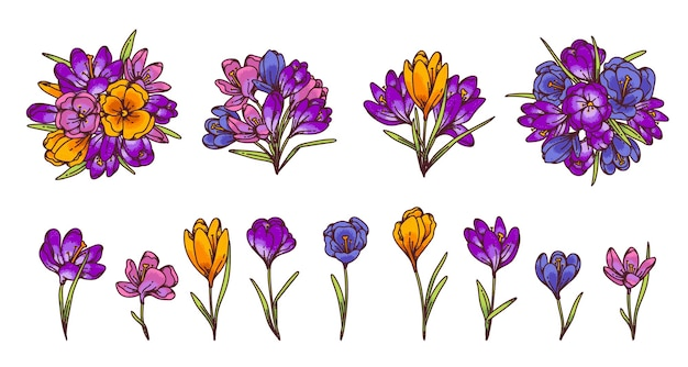 Crocus flowers and bouquets spring primroses set for greeting card. outline sketch illustration