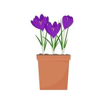 냄비에 크로커스. 봄 꽃 벡터 일러스트 레이 션, 흰색 배경에 고립