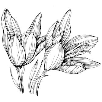 クロッカスまたはサフランの花。