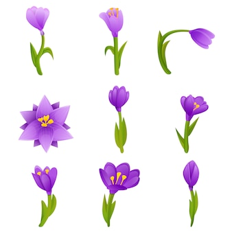 Crocus  set, cartoon style