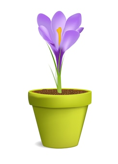 Crocuses in flowerpot illustration isolated