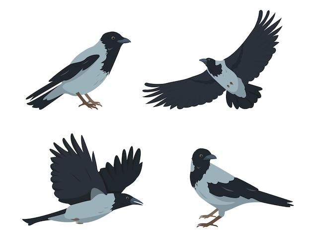 カラスの鳥は、孤立したさまざまなポーズでカラスを設定します