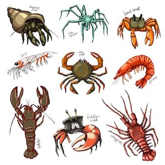 甲殻類のカニエビ海ロブスターとザリガニまたはザリガニシーフードイラスト甲殻類海の動物のエビの文字が白い背景で隔離のセット