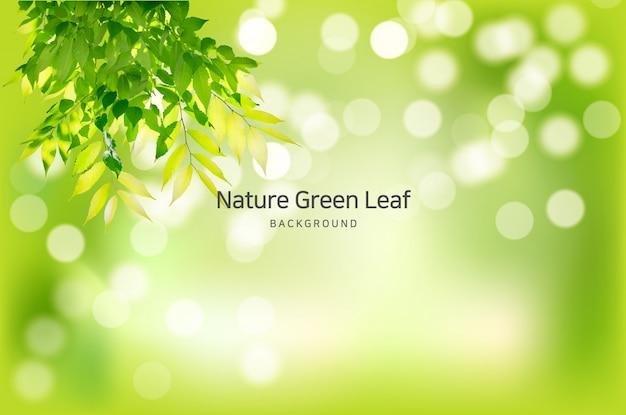 Кристально чистые природные весенние фоновые ветви