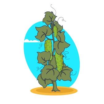 Cucumber plant. cucumis sativus. agriculture cultivated cucumber plant. green leaves.  illustration