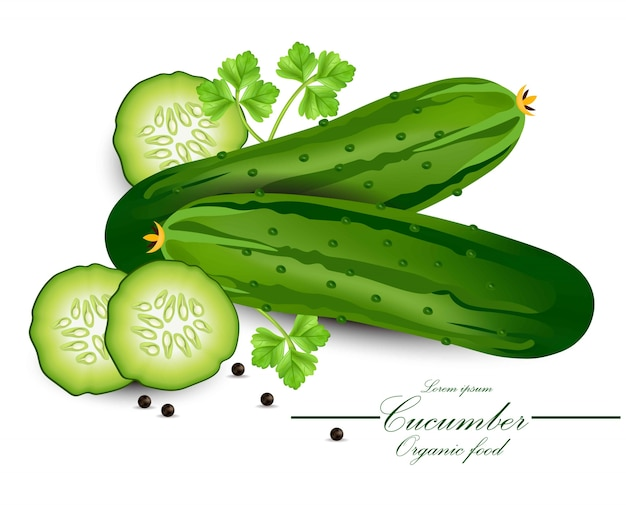 Cucumber realistic vector. organic detailed vegetable backgrounds